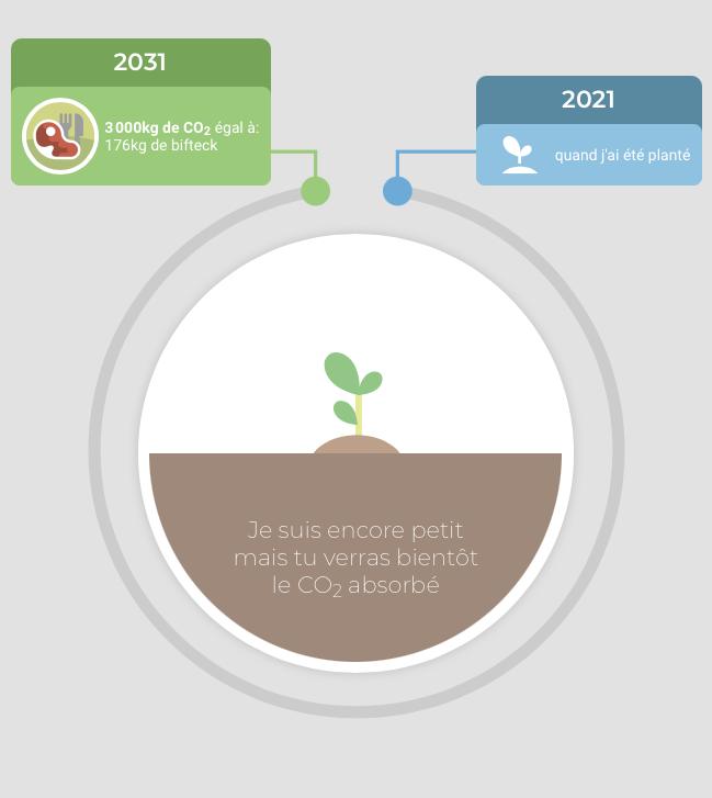 équivalent en bifteck 3000kg de CO2 et 2031 et date de plantation 2021